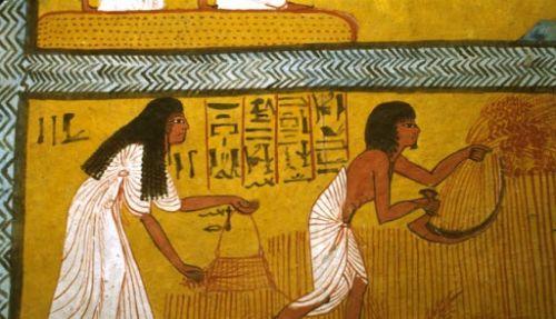 ancient egypt quiz - ancient egyptian farmers